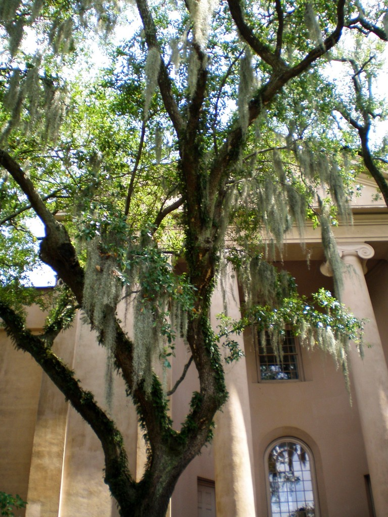 college of charleston willows