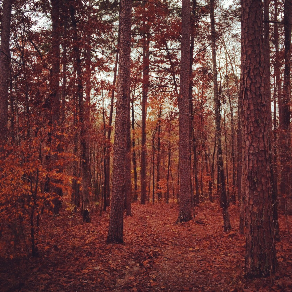 hiking through the woods in hot springs village, arkansas while visiting family.