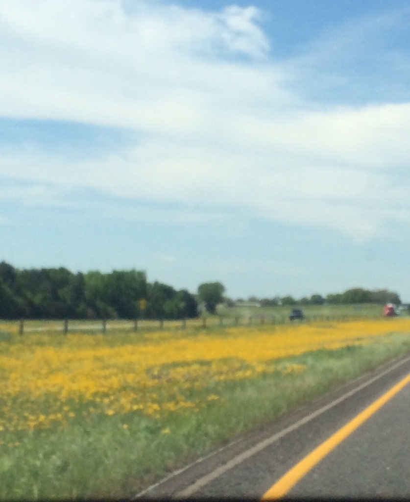 blurry, but beautiful - miles of bright yellow wildflowers along highway 45