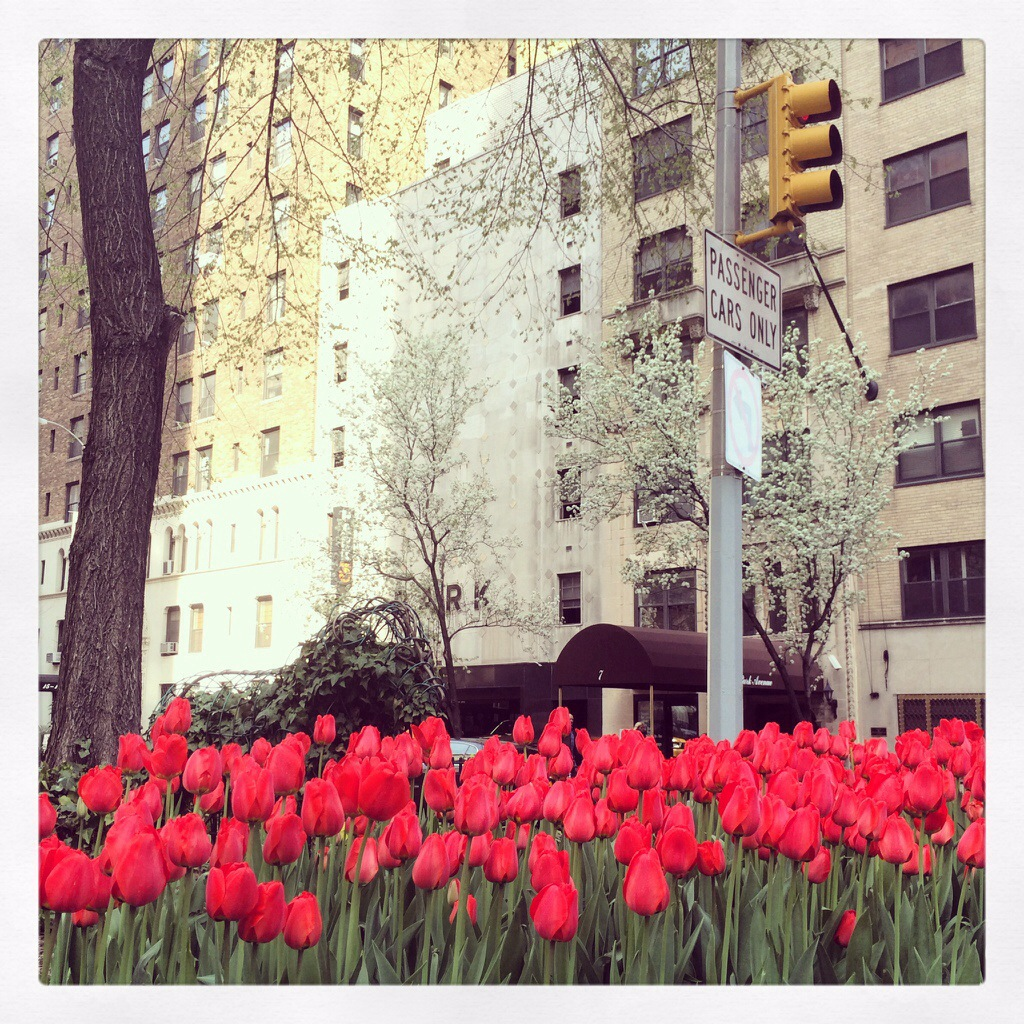 tulips on park avenue