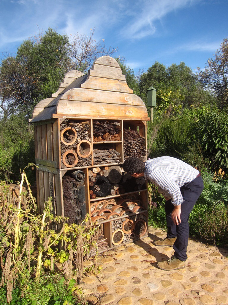 this is where they house insects that help keep away harmful pests. my husband was intrigued, though he didn't spot any current residents.