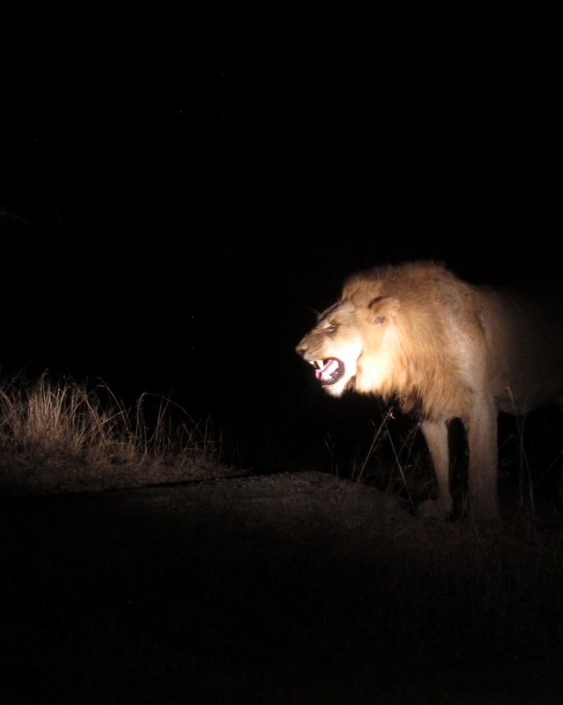 this is what you find at night when searching for nocturnal animals. #scary