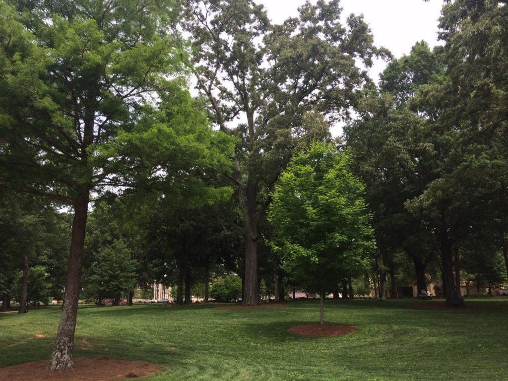 the famous grove at ole miss - this time, with no tailgaters